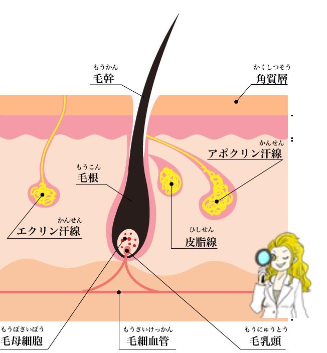 TBCスーパー脱毛は脇を脱毛するのには一番オススメです。